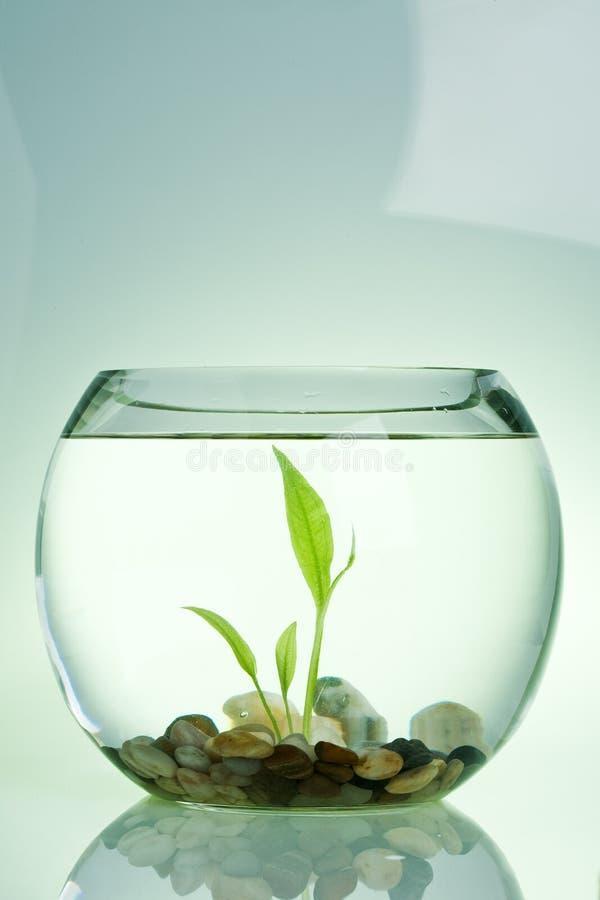 Waterplant royalty-vrije stock afbeelding