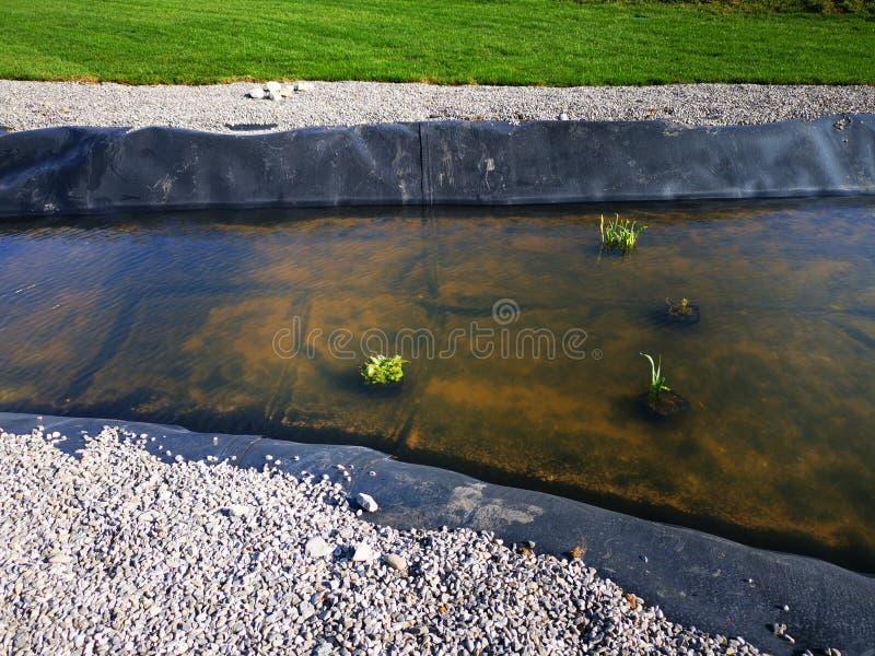 Waterplant op oppervlakte van thermisch water royalty-vrije stock fotografie