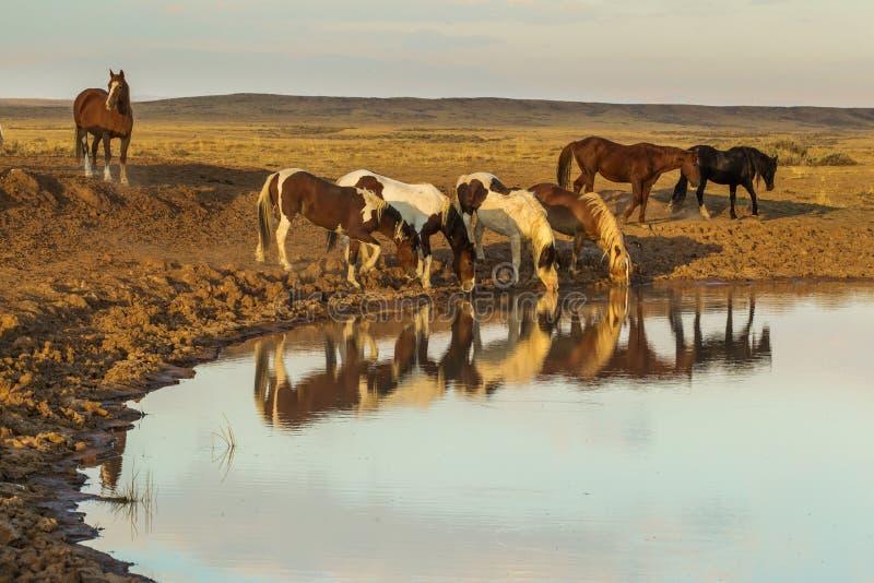 Waterpoel stock foto