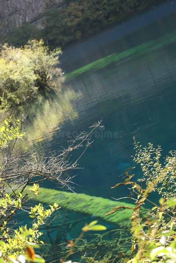 waterpool 5 цветков стоковые фото