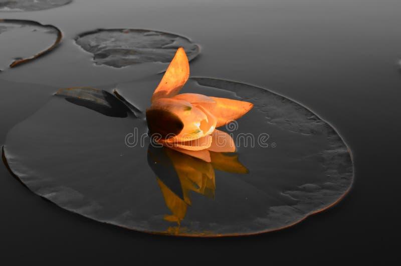 Waterprinses bij zonsondergang stock foto