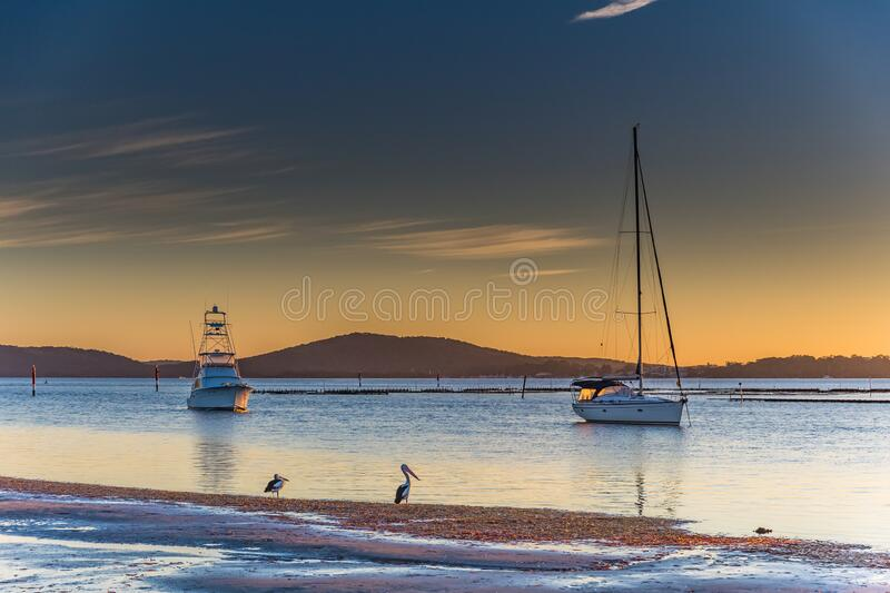 Pelicans at sunrise stock image. Image of bird, natural ...