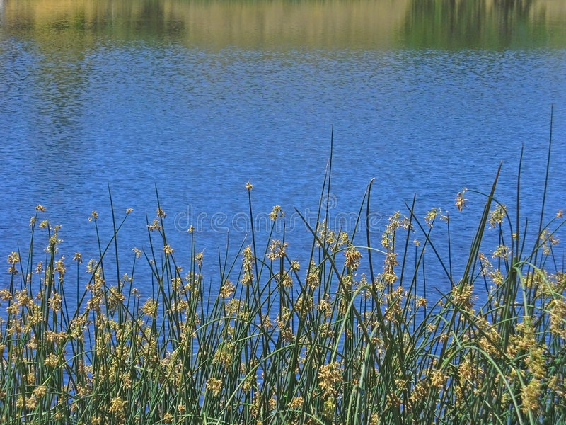Waterscape sereno fotografía de archivo libre de regalías