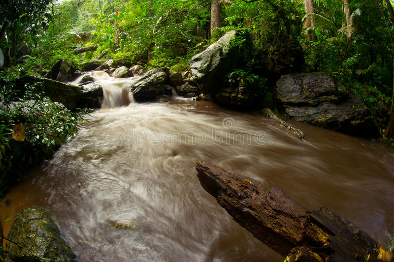 Watershed. Stream from the mountains. Rainforest. royalty free stock photos