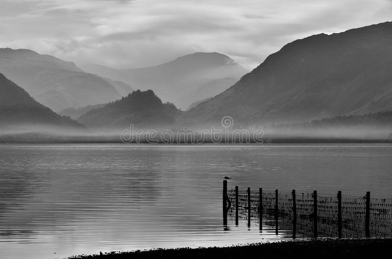 Download Sheep Fence, Derwentwater, Cumbria Stock Photo - Image of greyness, dark: 22039294