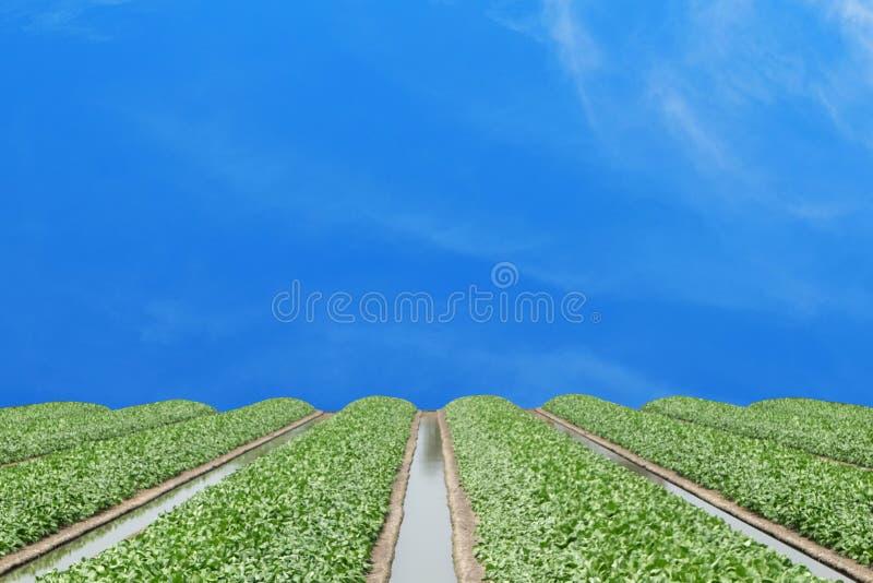 Waterstromen in het midden van het kader met anderen en groente stock afbeeldingen