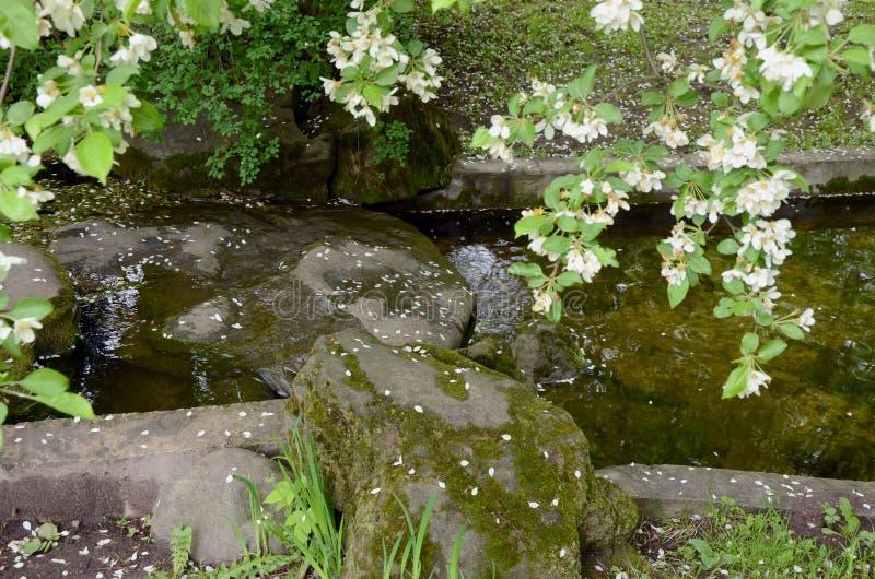 Waterstroom in Japanse Tuin stock afbeeldingen