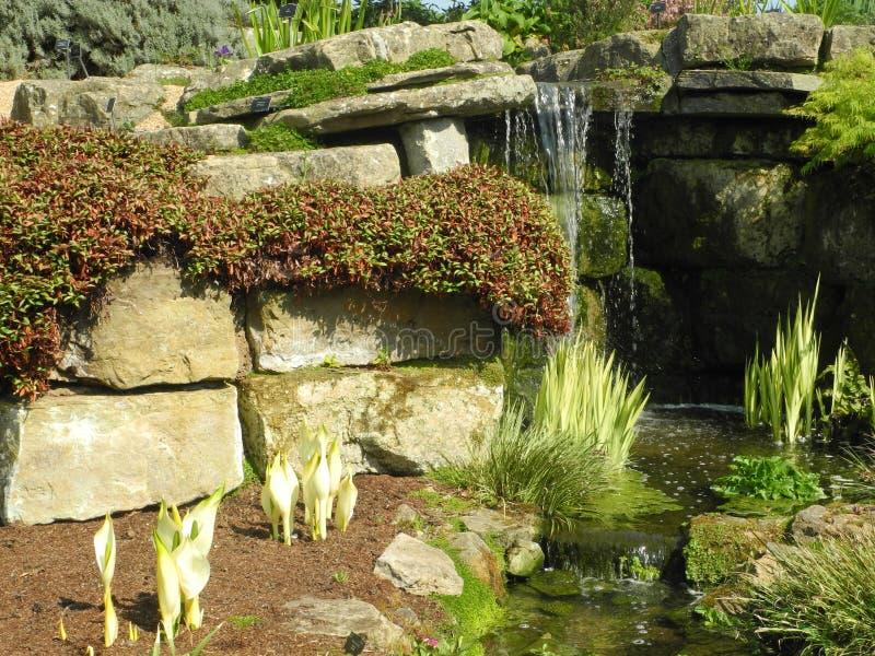 Waterval in alpiene tuin stock foto's