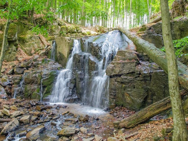 Waterval in beukbos in de Karpatische bergen stock foto