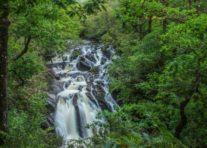 Waterval in bos, Lochy-Dalingen, Schotland stock foto