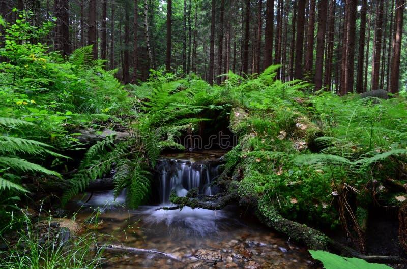Waterval in Cr stock afbeeldingen