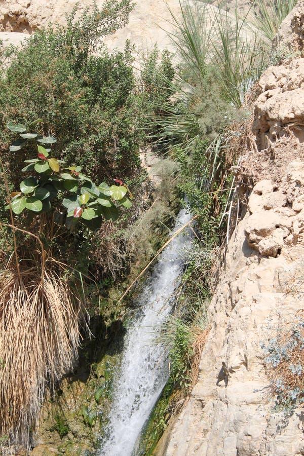 Waterval in David Brook Waterfalls National Park, Dode Overzees, Israël royalty-vrije stock foto