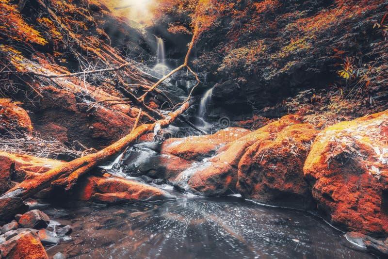 Waterval in de herfstbladeren met trillende kleur royalty-vrije stock afbeeldingen
