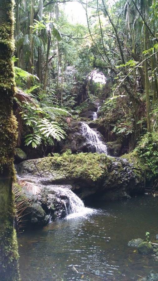 Waterval die langs rotsen aan een pool in Hawaï vallen royalty-vrije stock foto
