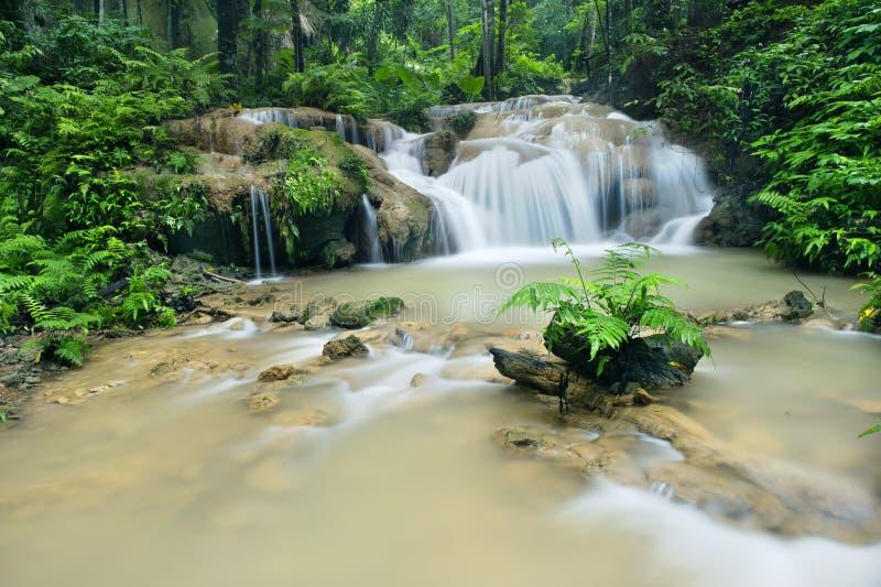 Waterval in diep bos stock afbeeldingen