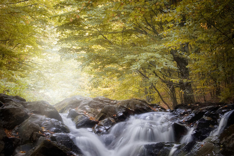 Waterval in een bos in de herfst stock afbeeldingen