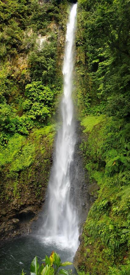 Waterval in een Regenwoud, Dominica, Caraïbische eilanden stock afbeeldingen