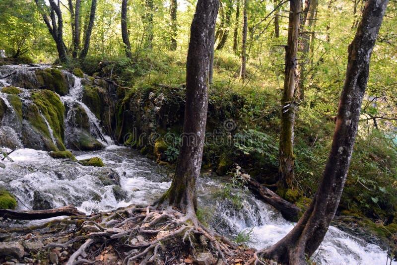 Waterval en bos stock afbeelding