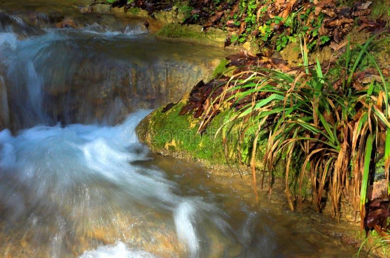 Waterval en groen gras, Sotchi, Rusland royalty-vrije stock afbeelding