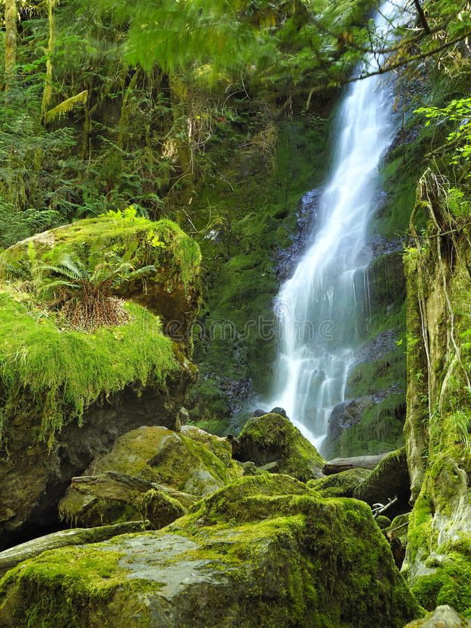 Waterval en Moss Covered Rocks Olympic National-Bos royalty-vrije stock fotografie