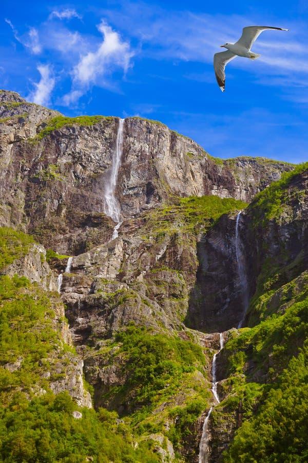 Waterval in Fjord Sognefjord - Noorwegen royalty-vrije stock fotografie