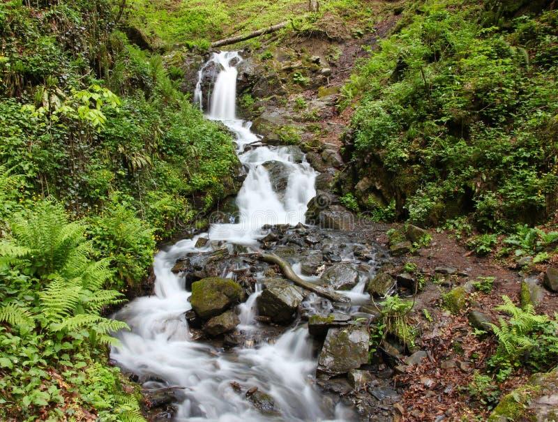 Waterval in groen bos met het effect van het motieonduidelijke beeld royalty-vrije stock foto's