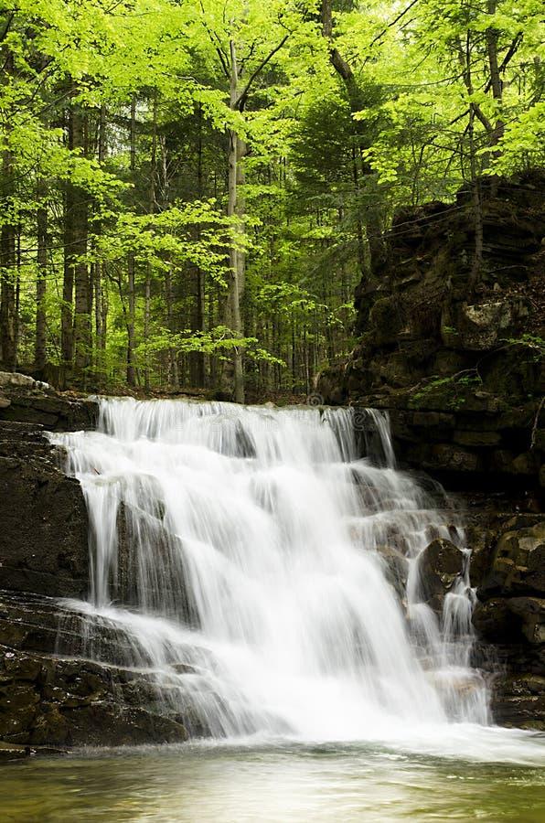 Waterval in groene de lente bos Karpatisch, de Oekraïne stock afbeelding