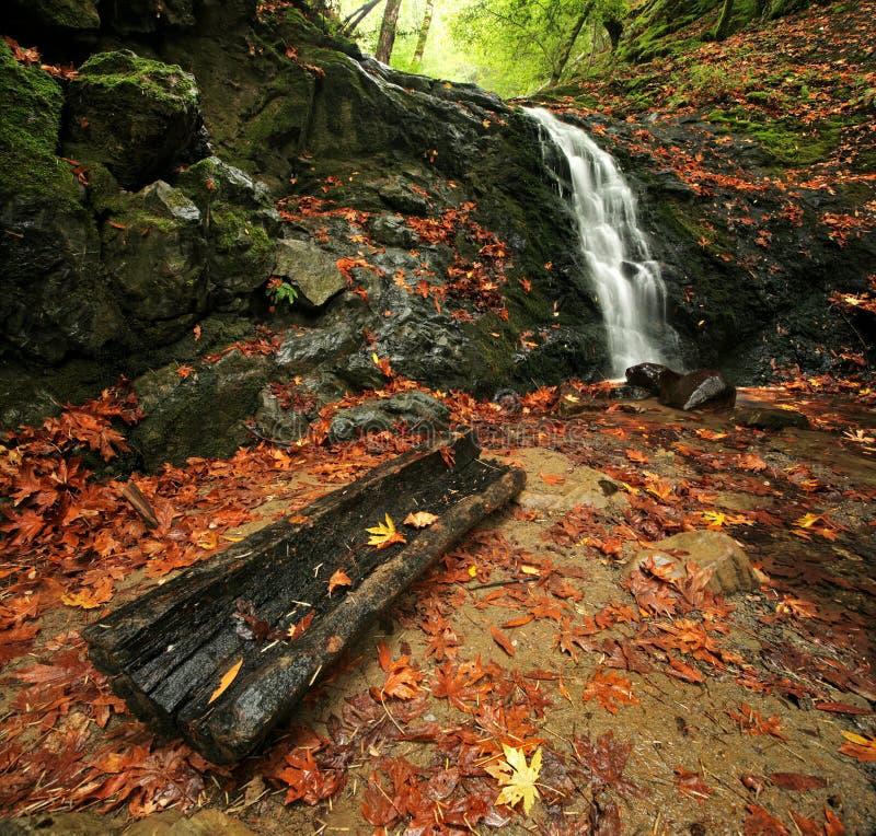 Waterval in het Bos van de Herfst stock foto