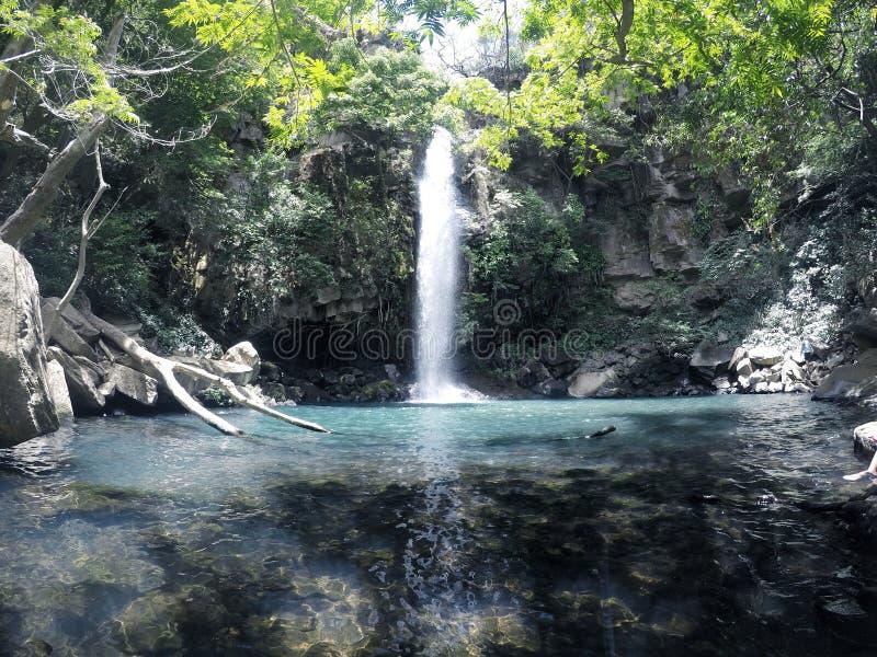 Waterval omgeven door overvloedig regenwoud stock afbeelding