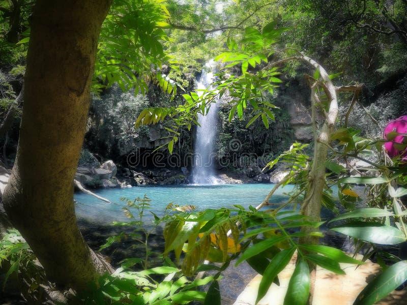 Waterval omgeven door overvloedig regenwoud stock foto