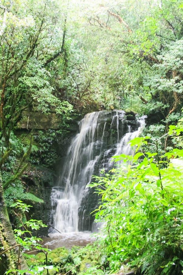 Waterval op een berg Landschappen van Nieuw Zeeland stock fotografie