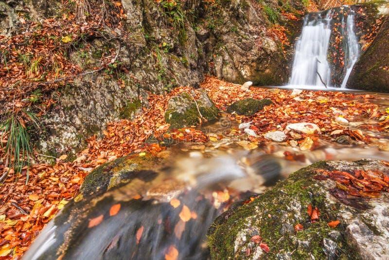 Waterval op een stroom in de herfstbos stock afbeeldingen