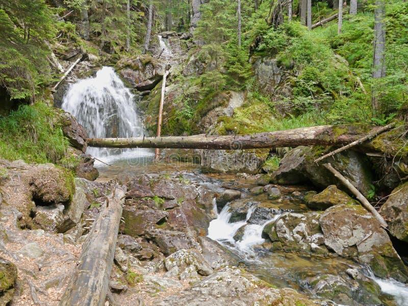 Waterval Riesloch, massief beboste rotsen royalty-vrije stock fotografie