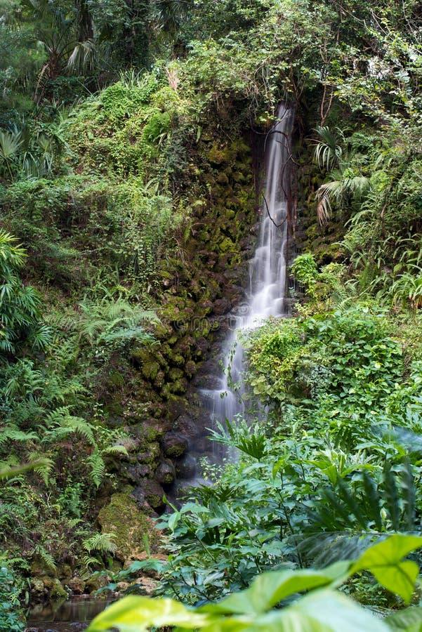 Waterval stroomafwaarts van het dichte lush-bos royalty-vrije stock fotografie