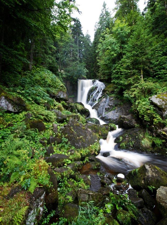 Waterval, Zwart Bos, Duitsland royalty-vrije stock afbeelding