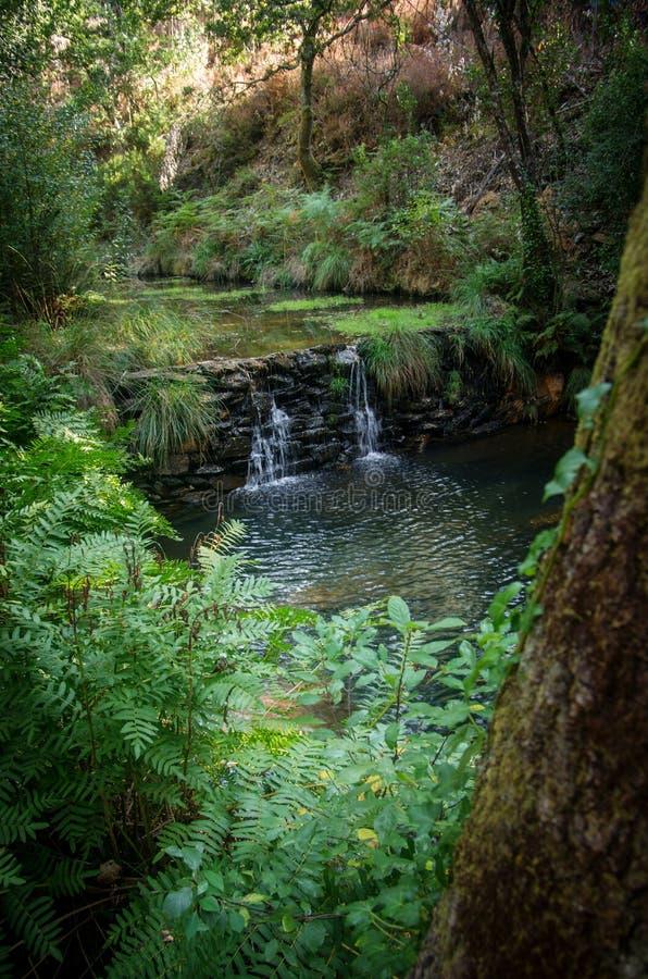 Watervalkreek stock foto's