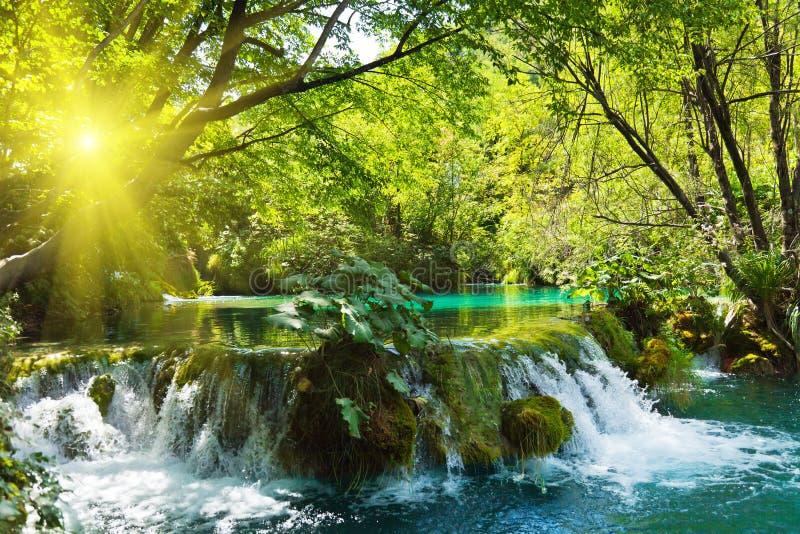 Watervallen in bos stock afbeeldingen