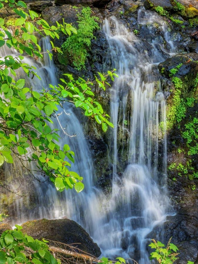 Watervallen met groene bladeren stock afbeelding