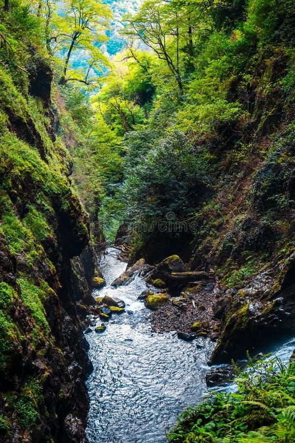 Watervalreus Oostelijk Abchazië Dichtbij de stad van Tkvarcheli Akarmaradistrict stock afbeeldingen