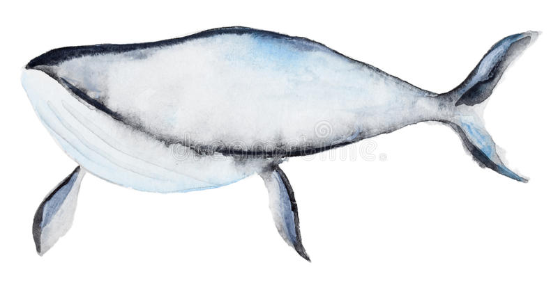 Waterverf blauwe vinvis vector illustratie