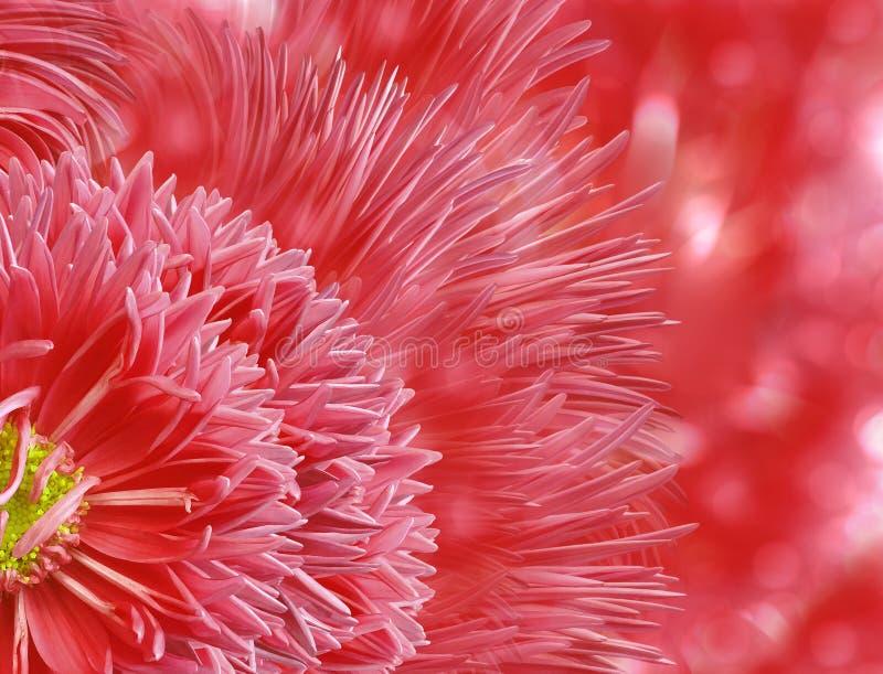 Waterverf bloemen rode achtergrond De bloemblaadjes van de asterbloem op de achtergrond van het bokeh rood-roze royalty-vrije stock afbeelding
