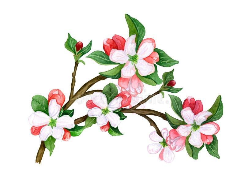 Waterverf Botanisch takje van bladeren en bloemen op witte achtergrond stock illustratie