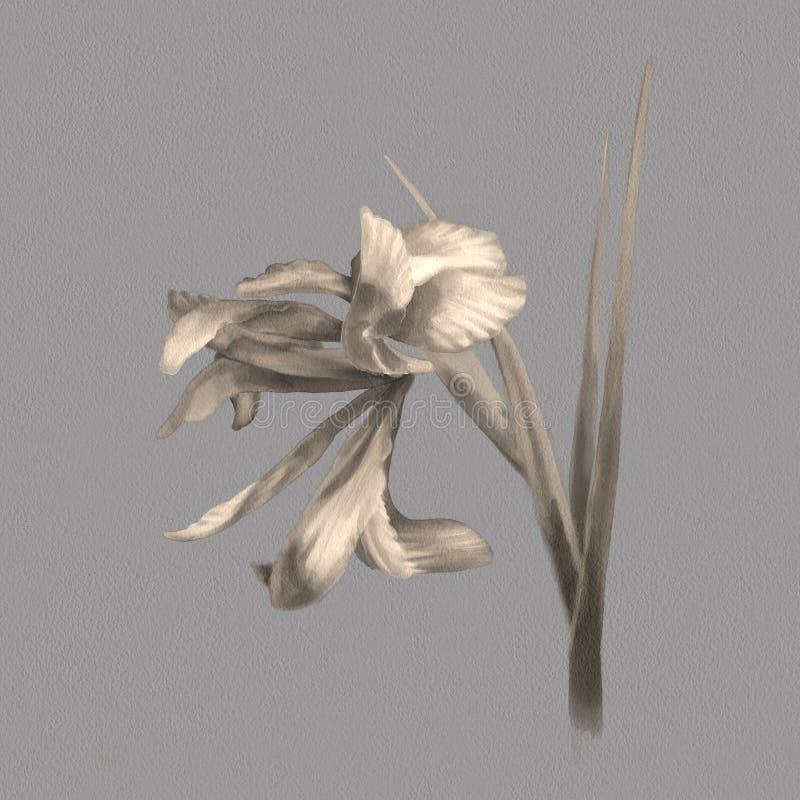 Waterverf botanische illustratie stock illustratie