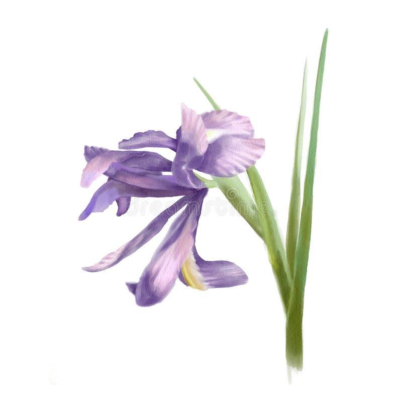 Waterverf botanische illustratie vector illustratie