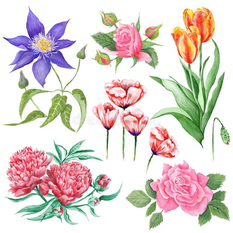 Waterverf Botanische Illustraties van de Zomerbloemen royalty-vrije illustratie