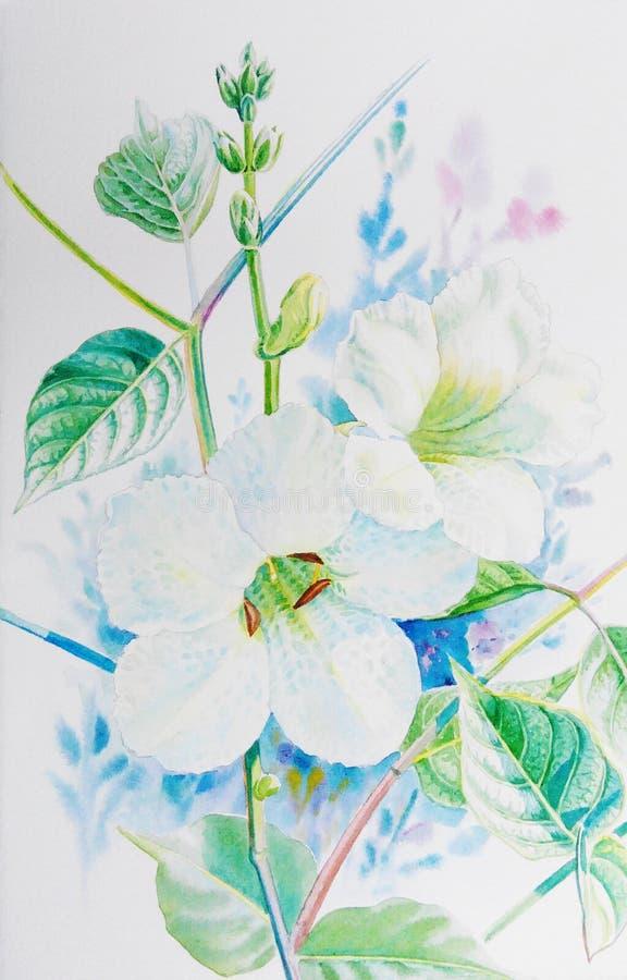 Waterverf die realistische witte bloem van acanthaceae en groene bladeren schilderen royalty-vrije illustratie