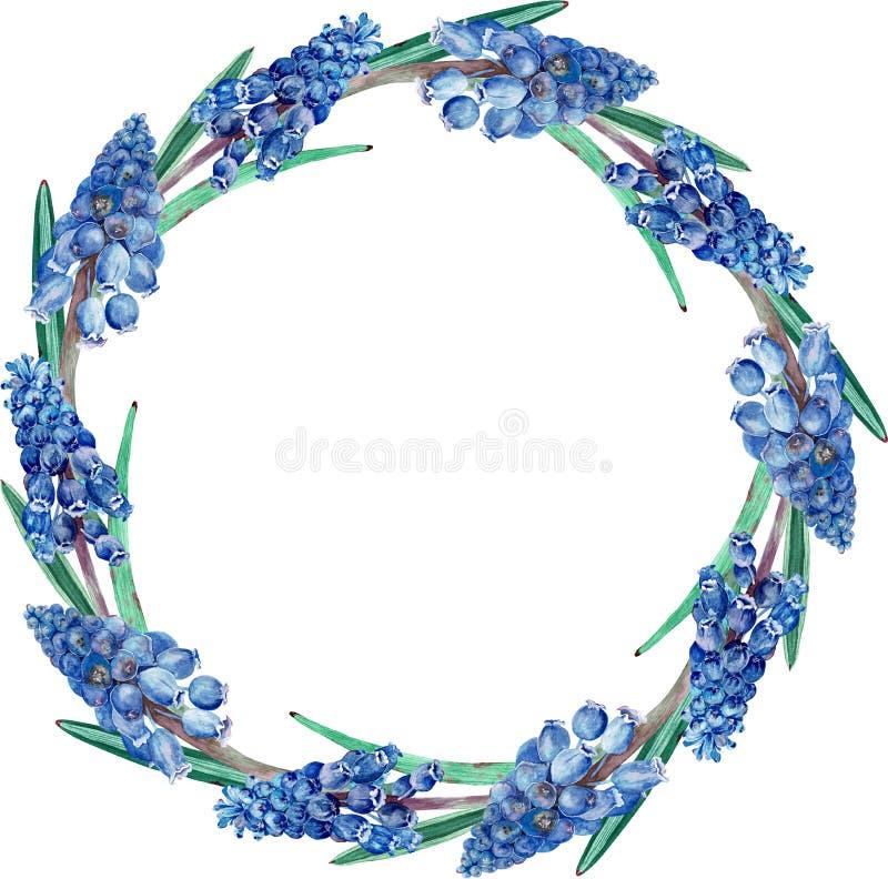 Waterverf donkerblauw bloemen rond kader Een kroon van de eerste de lentebloemen wordt op witte achtergrond worden geïsoleerd gem royalty-vrije illustratie