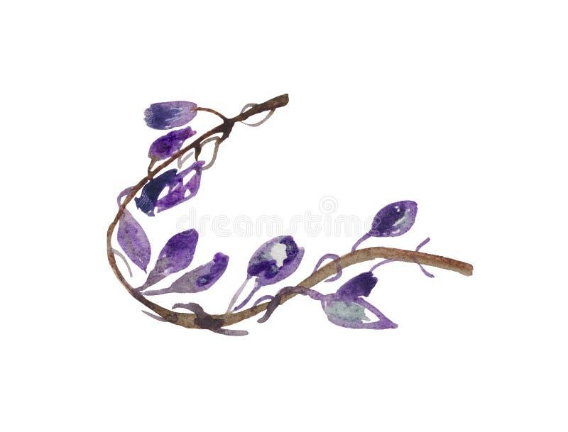 Waterverf, gestileerde tak van wijnstokken met bloemen royalty-vrije illustratie