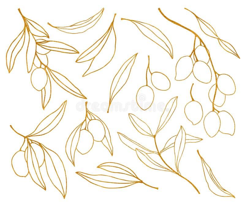 Waterverf gouden schets met olijf, bladeren en tak De hand schilderde de bloemenreeks van de lijnkunst Illustratie die op wit wor stock illustratie