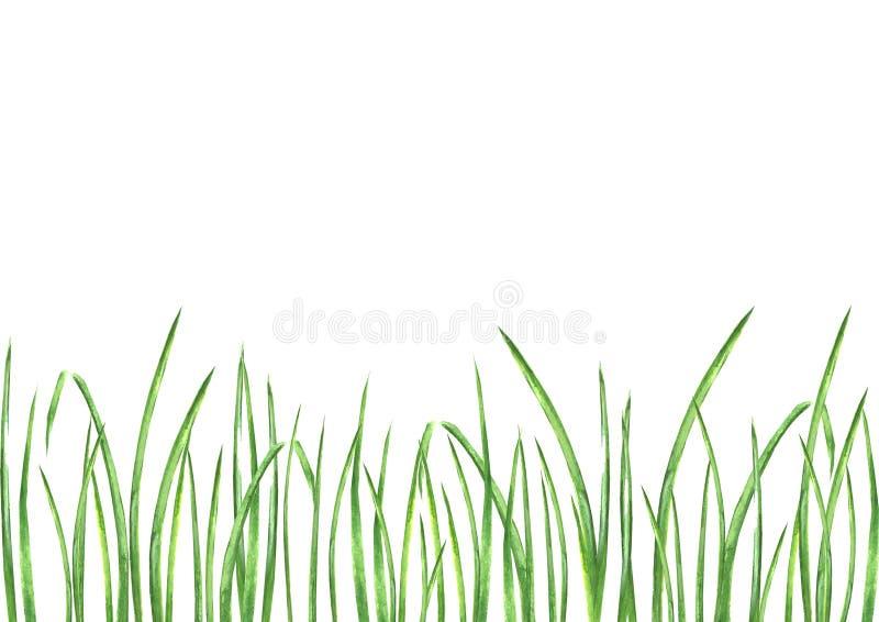 Waterverf groen gras royalty-vrije illustratie